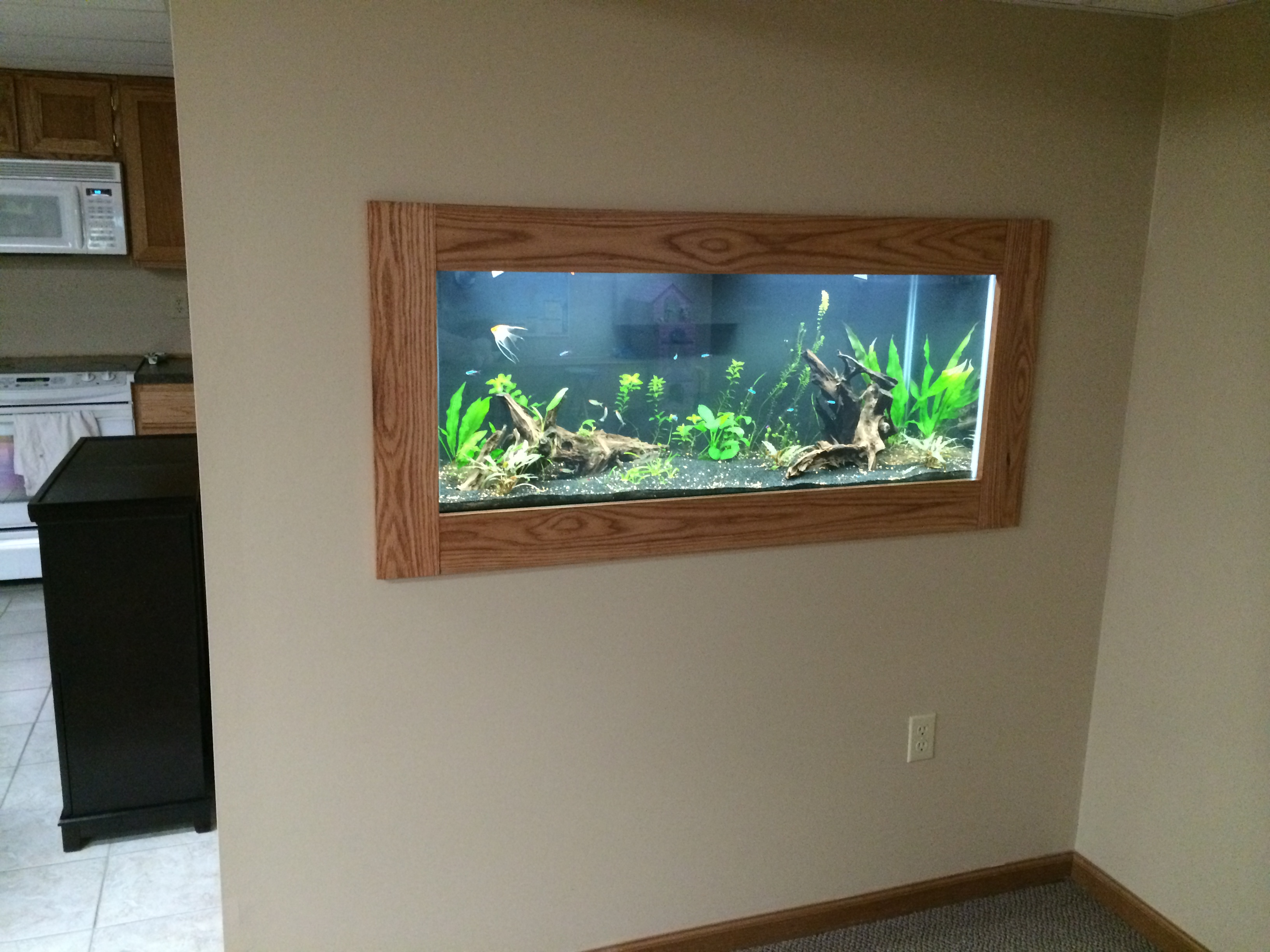 My in wall 75 gallon planted tank aquarium advice aquarium the tank is a standard 75 gallon 48x18x21 the frame is red oak stained with a pecan satin stain all occupants of the tanks except for the rams were jeuxipadfo Images